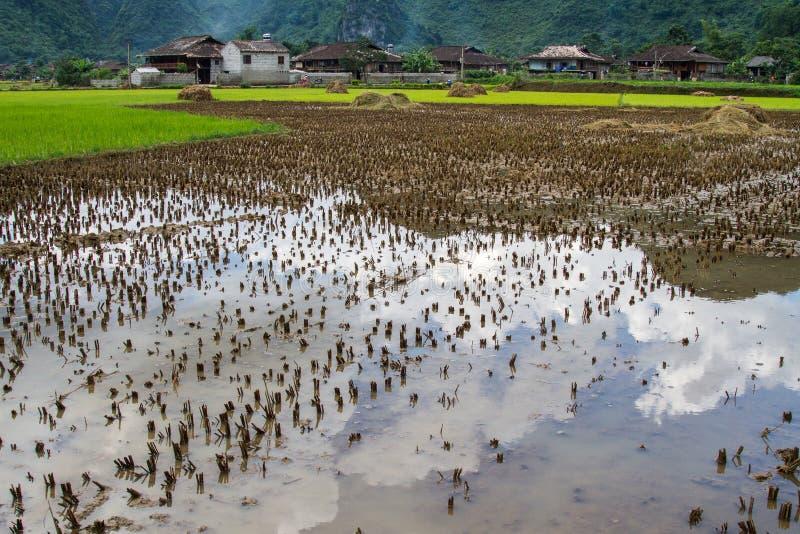 Campo do arroz de Bac Son fotos de stock royalty free