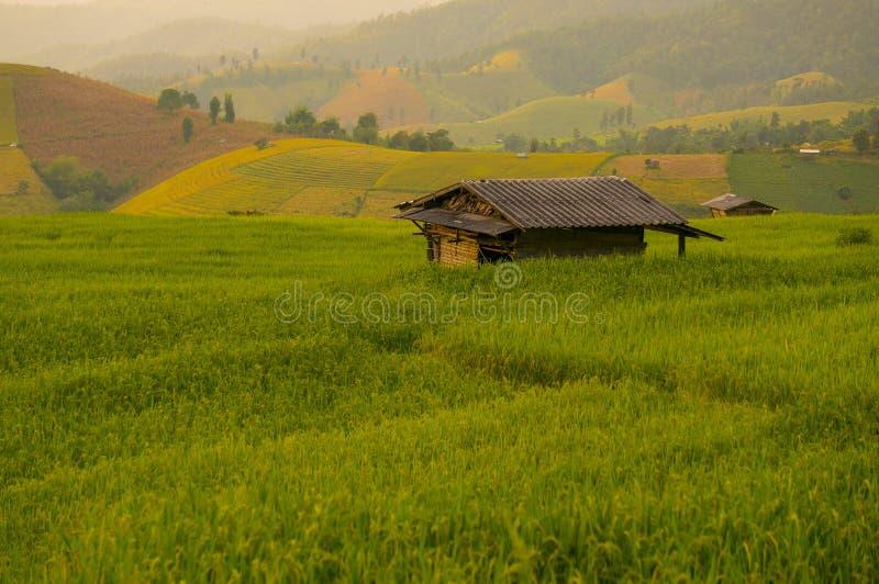 Campo do arroz e abrigo pequeno fotografia de stock royalty free