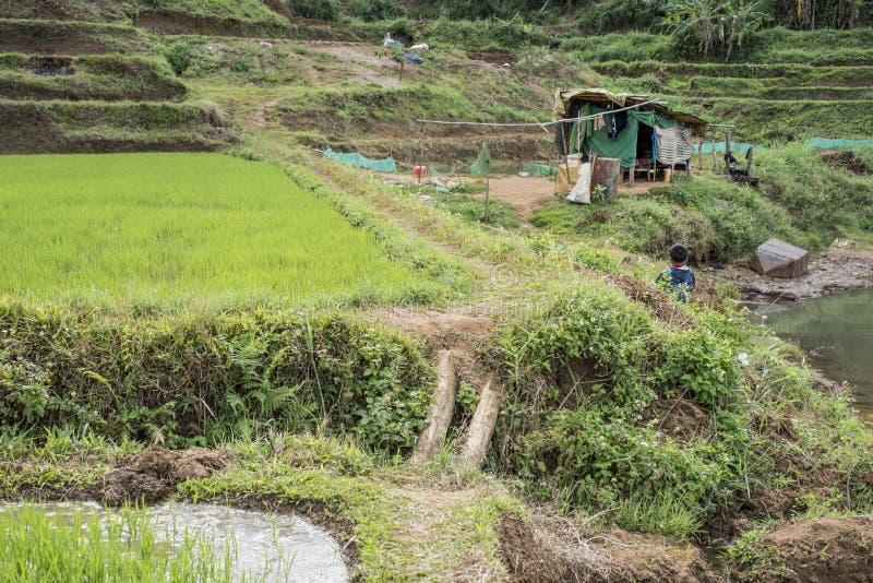 Campo do arroz e pouca cabana em Vietname imagens de stock royalty free