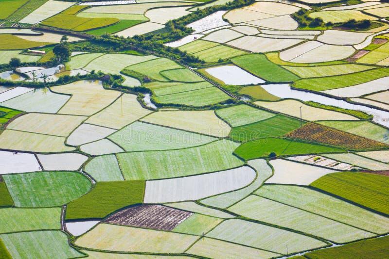 Campo do arroz em Bac Son, Vietname fotografia de stock