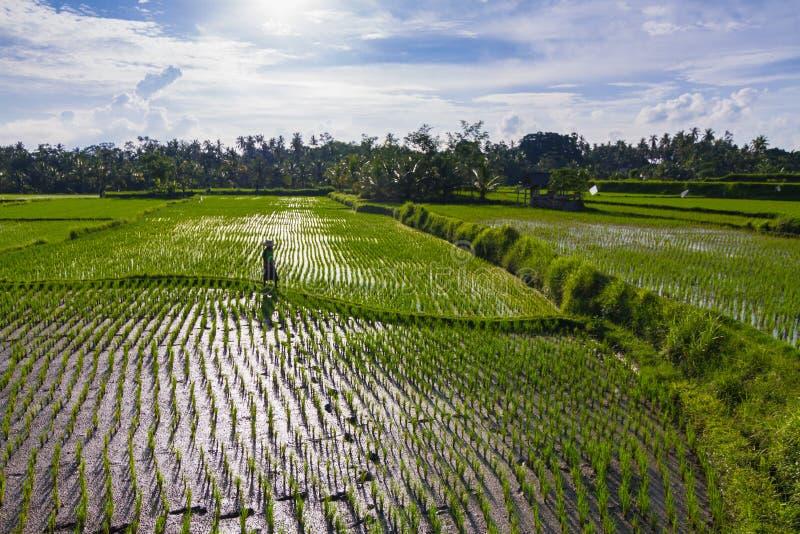 Campo do arroz em Bali fotos de stock royalty free