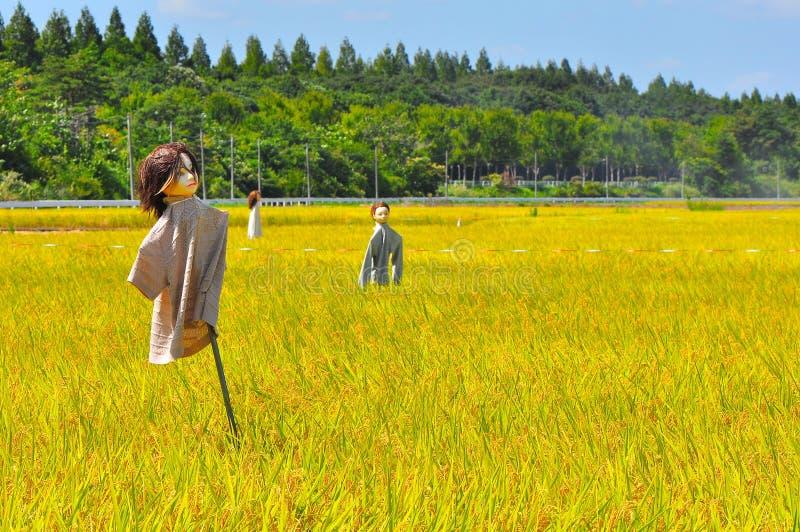 Campo do arroz em Japão foto de stock royalty free