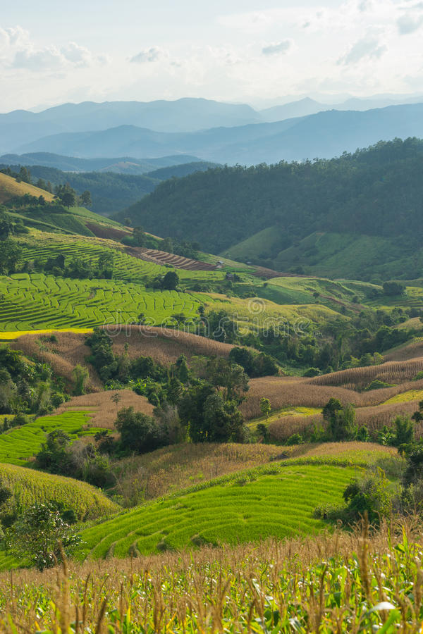 Campo do arroz em Mae Jam, província de Chiang Mai imagem de stock royalty free