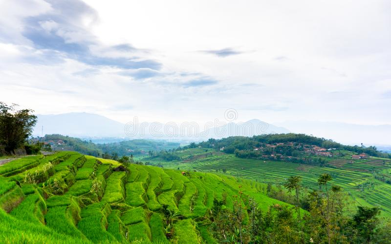 Campo do arroz em Sumedang, Java ocidental, Indonésia fotos de stock