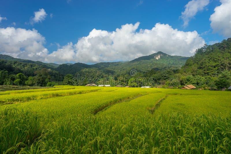 Campo do arroz na montanha de Inthanon, Chiang Mai, Tailândia foto de stock