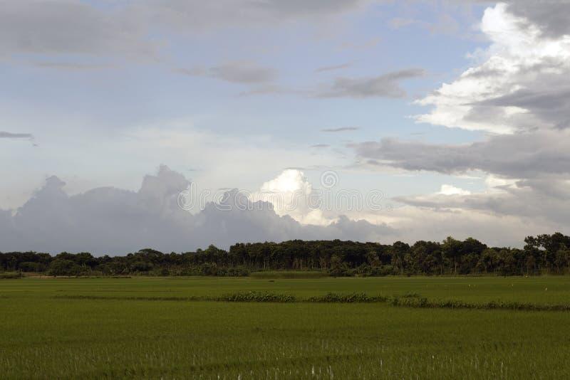 Campo do arroz 'paddy' da vila com céu fotos de stock royalty free