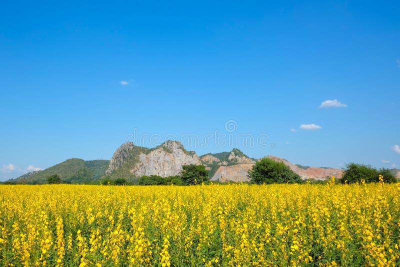 Campo do cânhamo de Sunn com fundo da montanha e do céu azul do espaço livre imagem de stock