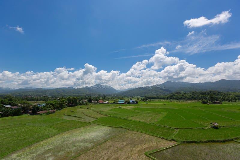 Campo do campo do arroz foto de stock