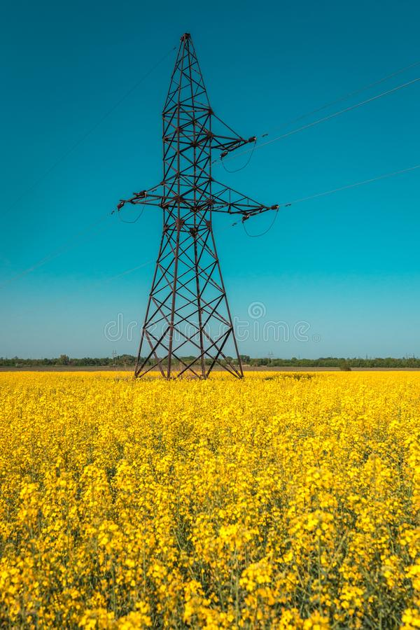 Campo do Canola com linhas elétricas de alta tensão no por do sol Combustível biológico do Canola fotos de stock