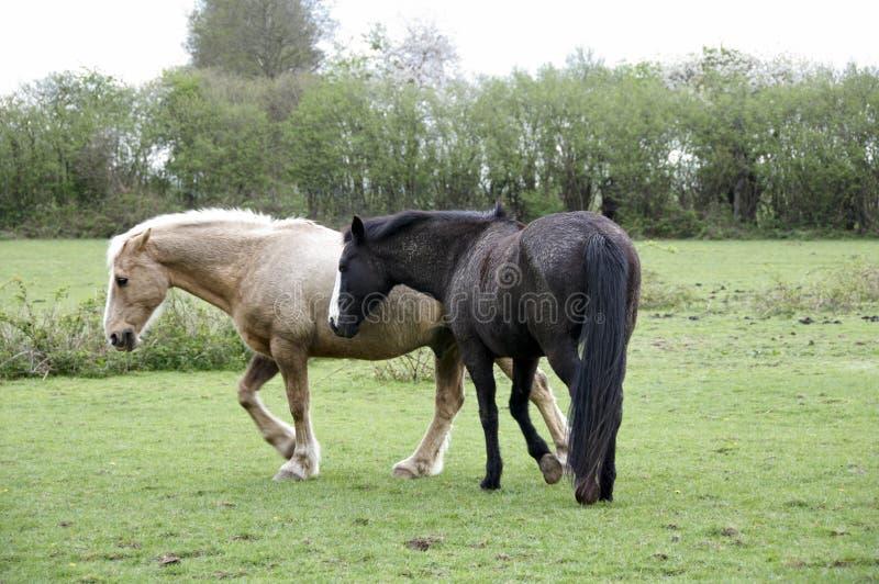 Campo do cavalo fotografia de stock