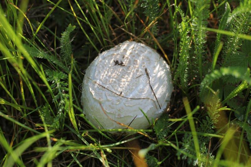 Campo do cogumelo imagens de stock