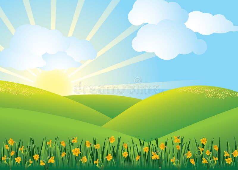 Campo do Daffodil - vetor ilustração royalty free