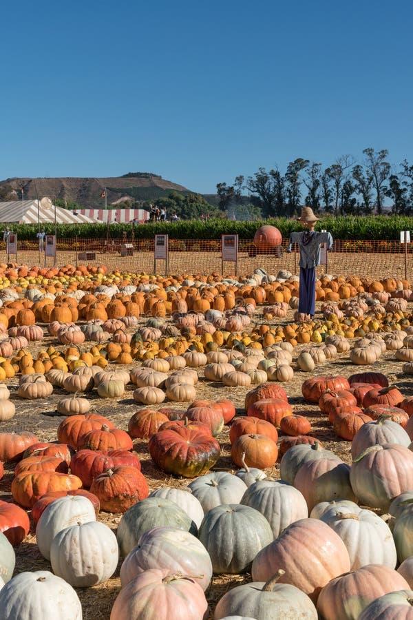 Campo do festival da colheita com abóboras e espantalhos, Un de Moorpark fotografia de stock