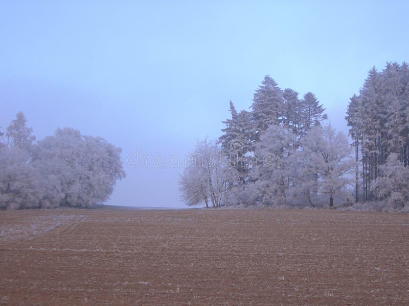 Campo do inverno fotos de stock royalty free