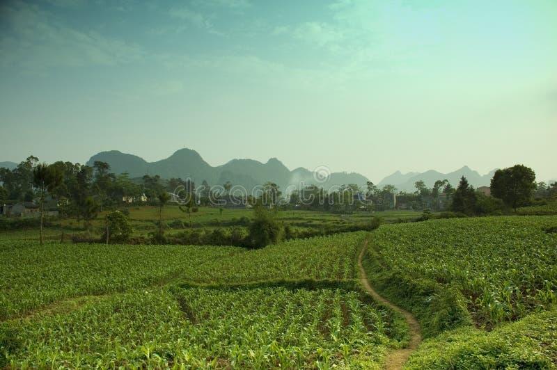 Campo do milho de Cao Bang fotografia de stock royalty free