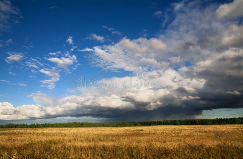 Campo do outono e céu amarelos do bllue imagens de stock royalty free