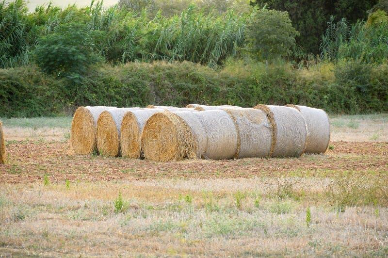 Campo do país na colheita fotos de stock