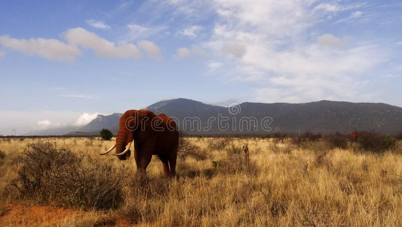 Campo do savana na temporada de ver?o foto de stock royalty free