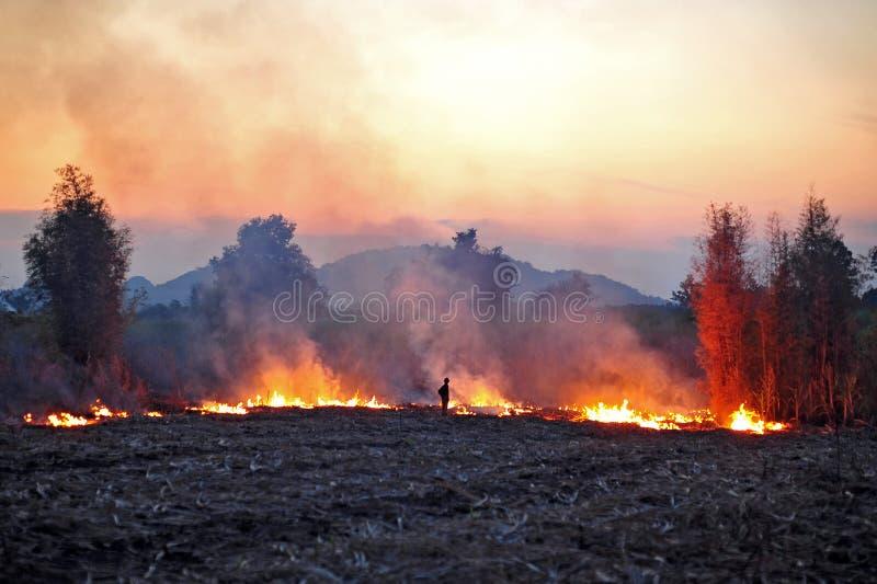 Campo do Sugarcane despedido fotos de stock