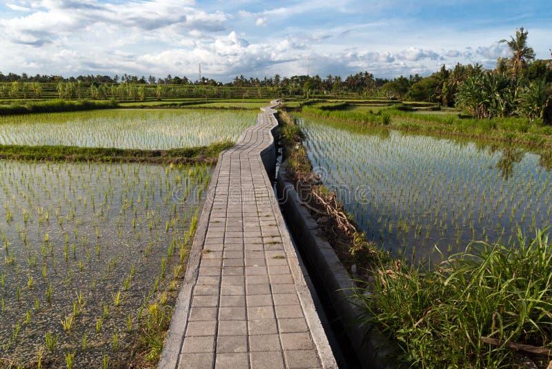 Campo do terraço do arroz, Ubud, Bali, Indonésia foto de stock royalty free