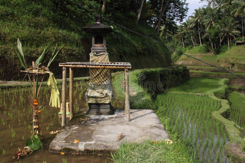 Campo do terraço do arroz, Ubud, Bali, Indonésia fotografia de stock