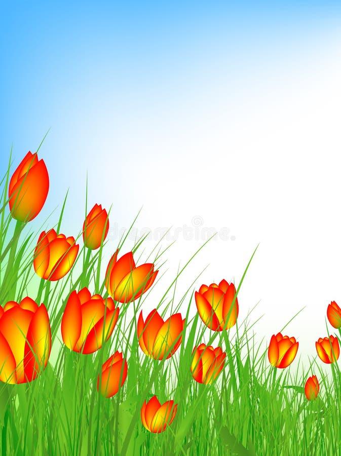 Campo do Tulip ilustração royalty free