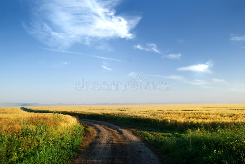 Campo do verão no nascer do sol fotos de stock
