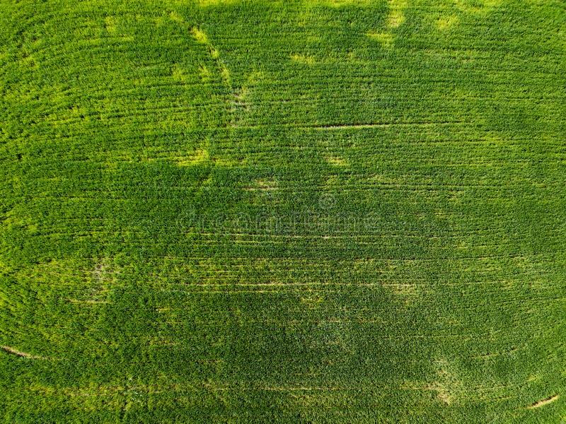 Campo do verde da vista aérea no campo Foto do zangão imagem de stock