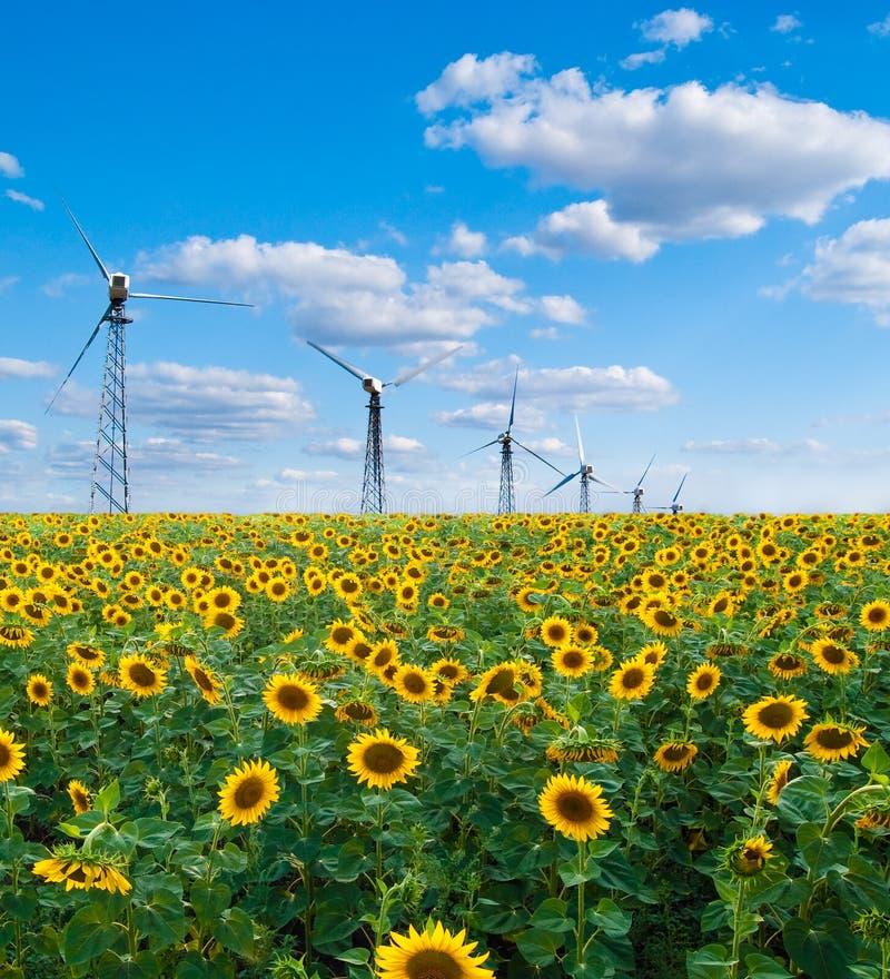 Campo dos girassóis e da estação das energias eólicas foto de stock