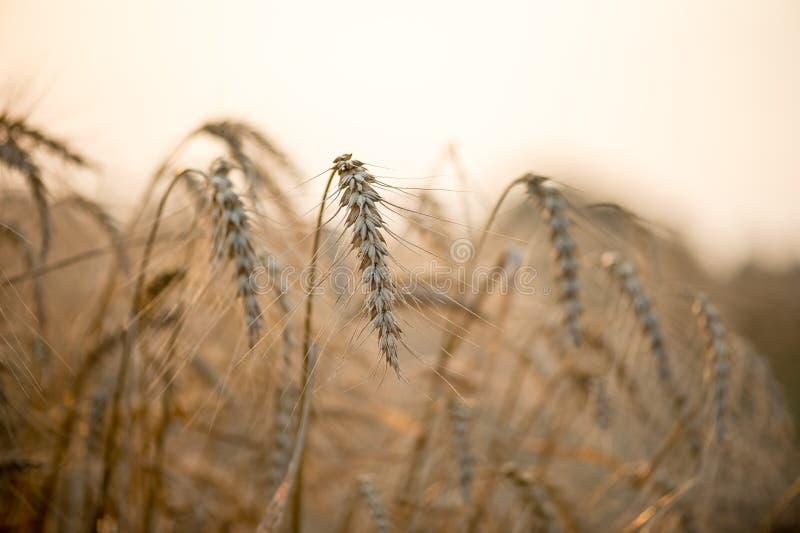 Campo dos pontos selvagens secos backlit com sol de ajuste imagens de stock royalty free