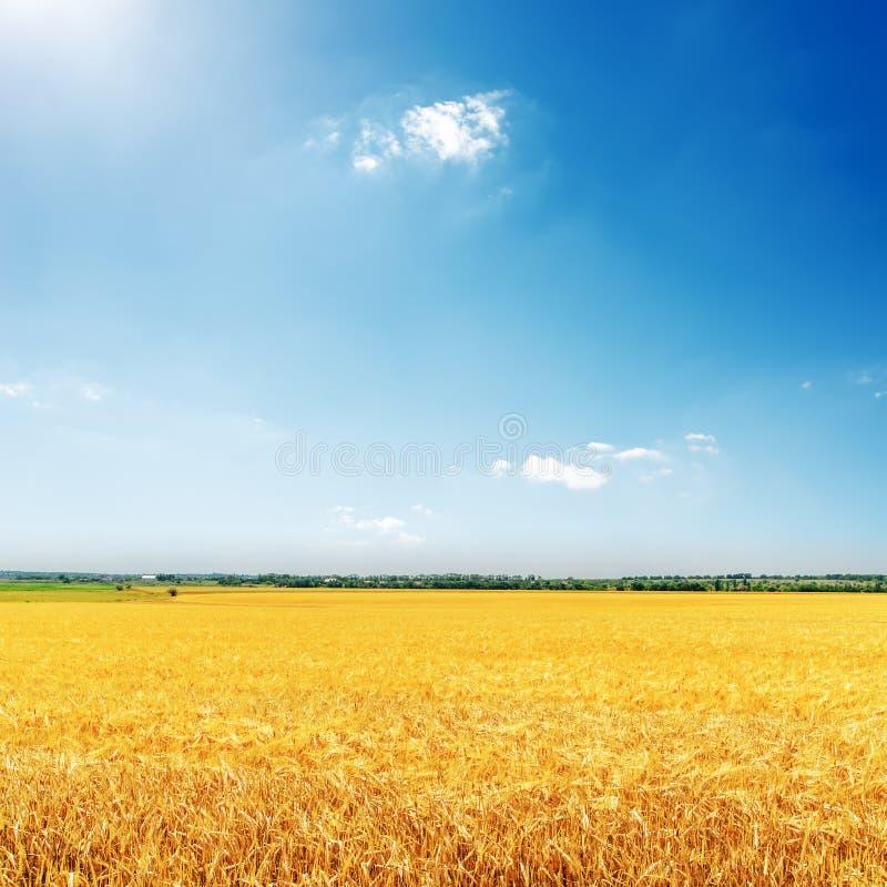 Campo dourado com colheita e o céu azul com sol fotografia de stock