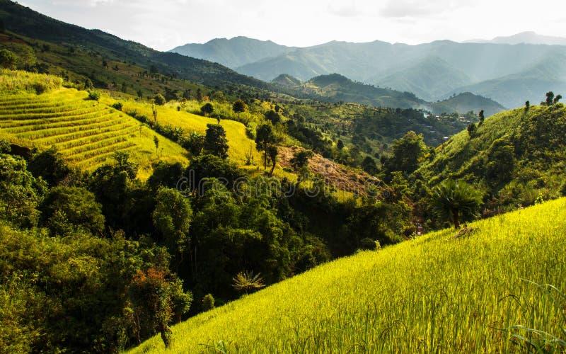 Campo dourado do arroz dos terraços, uma beleza natural bonita na montanha em Nan, Khun Nan Rice Terraces, Boklua Nan Province, T imagens de stock royalty free