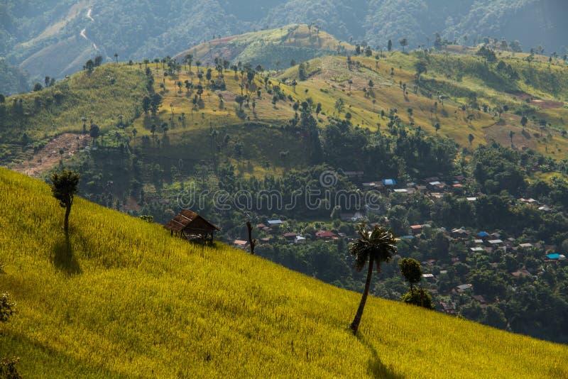 Campo dourado do arroz dos terraços, uma beleza natural bonita na montanha em Nan, Khun Nan Rice Terraces, Boklua Nan Province, T foto de stock