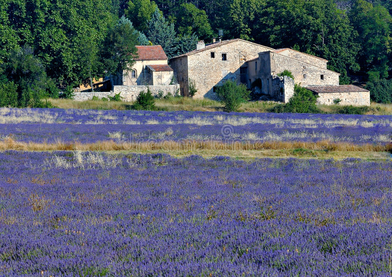 Campo e casa da quinta da alfazema foto de stock royalty free