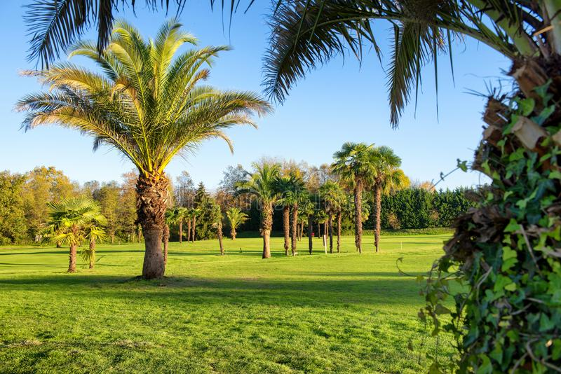 Campo e cielo blu verdi di golf fotografie stock