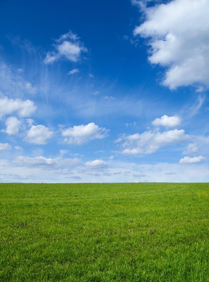 Campo e cielo verdi immagine stock