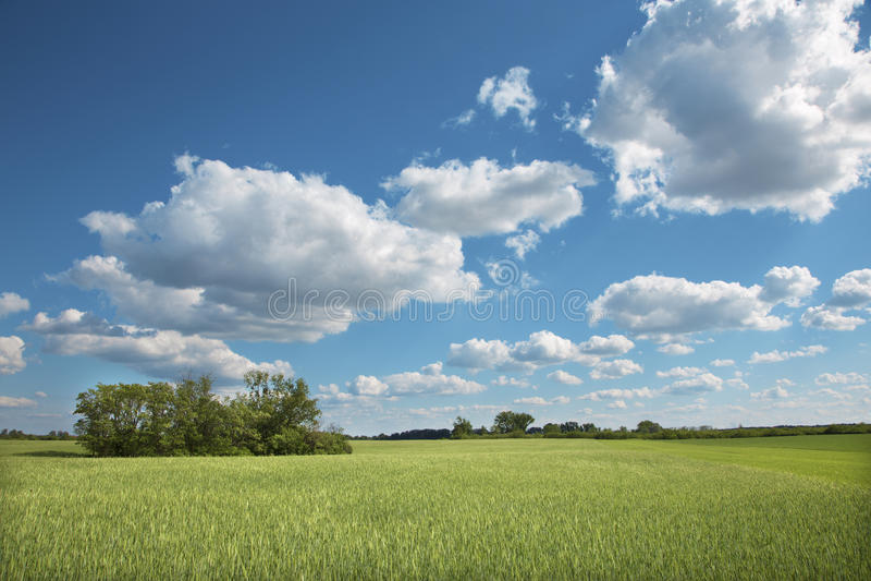 Campo e cloudscape na mola imagens de stock