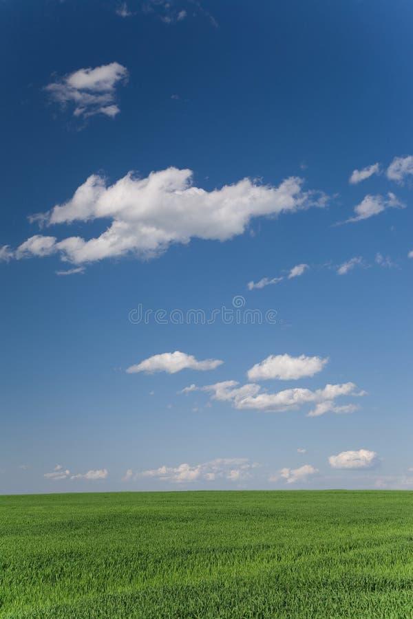 Campo e cloudscape verdes foto de stock