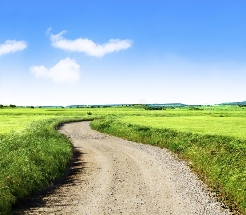 Campo e estrada de trigo imagens de stock