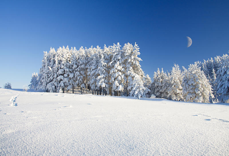 Campo e floresta de neve sob o céu azul com crescente foto de stock