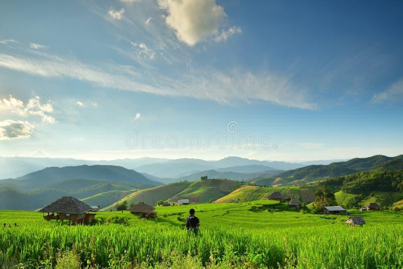 Campo e fotógrafo do arroz imagens de stock royalty free
