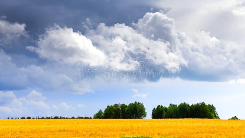 Campo e nuvens de trigo imagens de stock royalty free