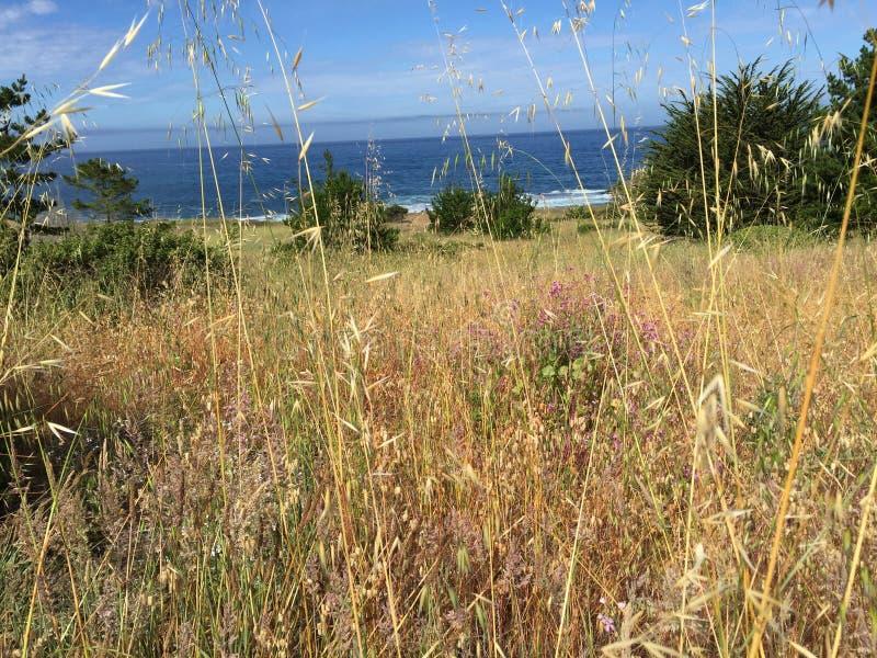 Campo e oceano de Mendocino fotos de stock royalty free