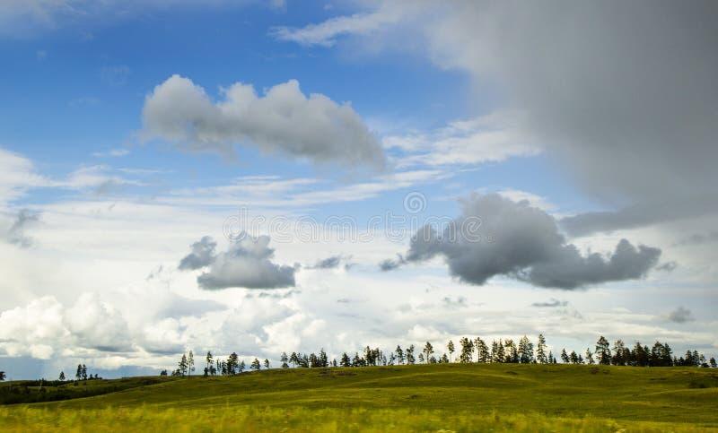 Campo e pinheiros amarelos sob o céu bonito na maneira de Karaganda a Astana, Cazaquistão imagens de stock