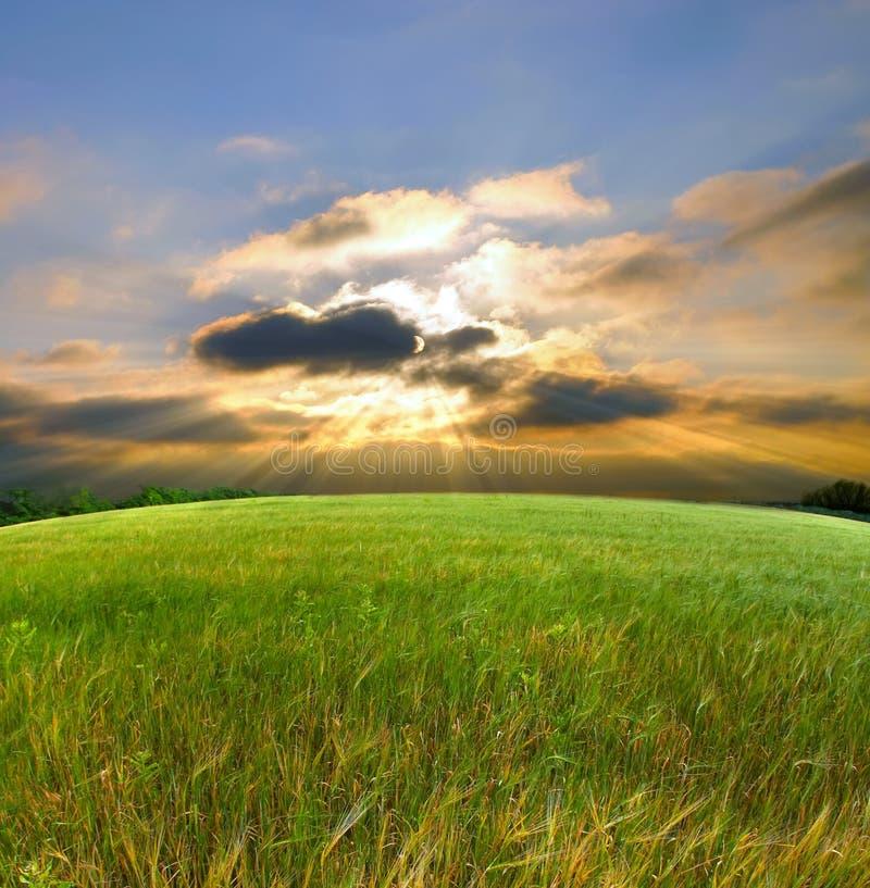 Campo e por do sol verdes fotografia de stock