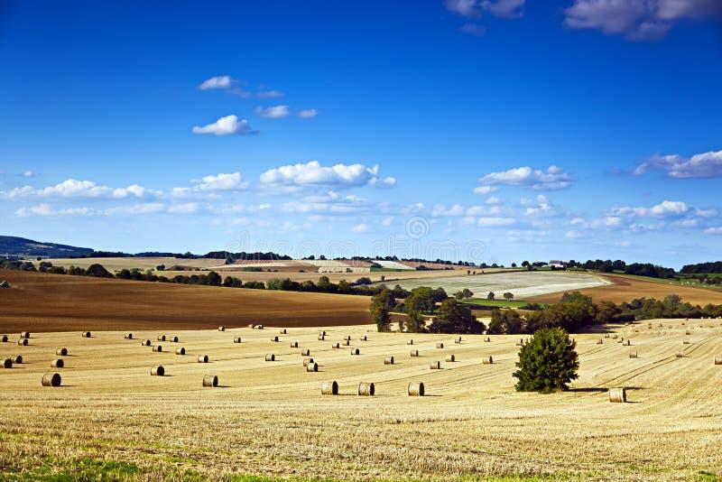 Campo ed azienda agricola fotografie stock libere da diritti