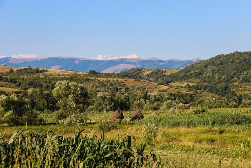 Campo em Banat, Romênia imagem de stock royalty free