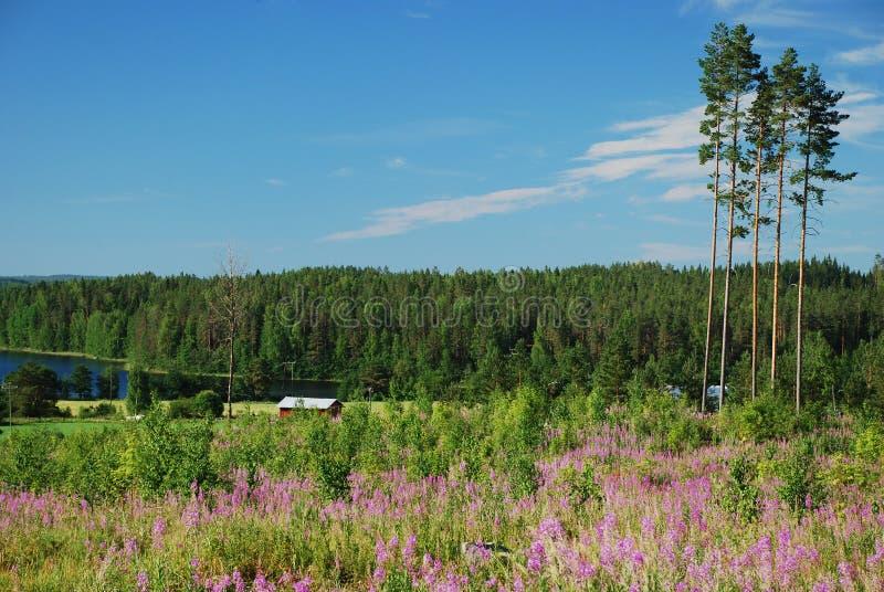 Campo em Hankasalmi de Finlandia central foto de stock
