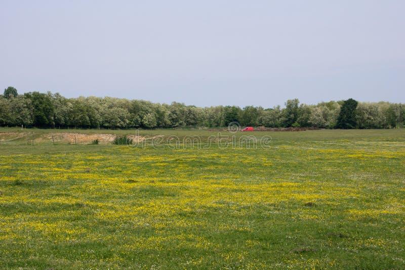 Download Campo em Hungria imagem de stock. Imagem de grama, heavenly - 65575549