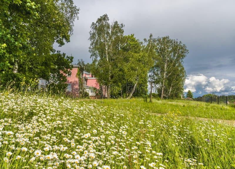 Campo em Rússia fotos de stock